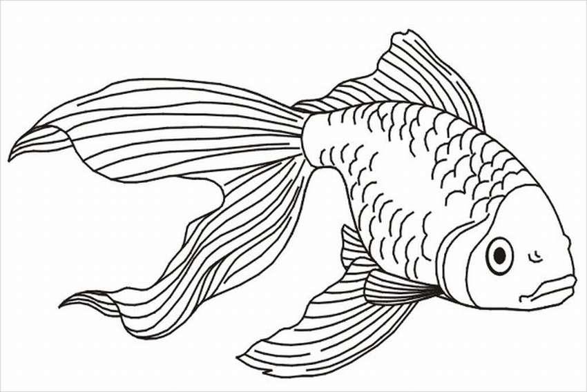 раскраска рыбка для детей