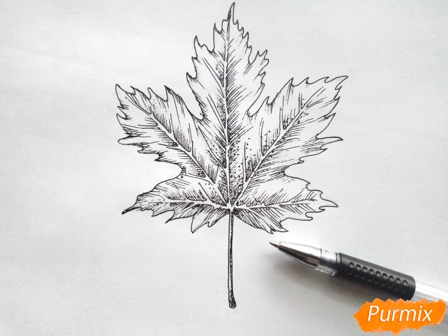 Рисуем кленовый лист черной ручкой - шаг 6