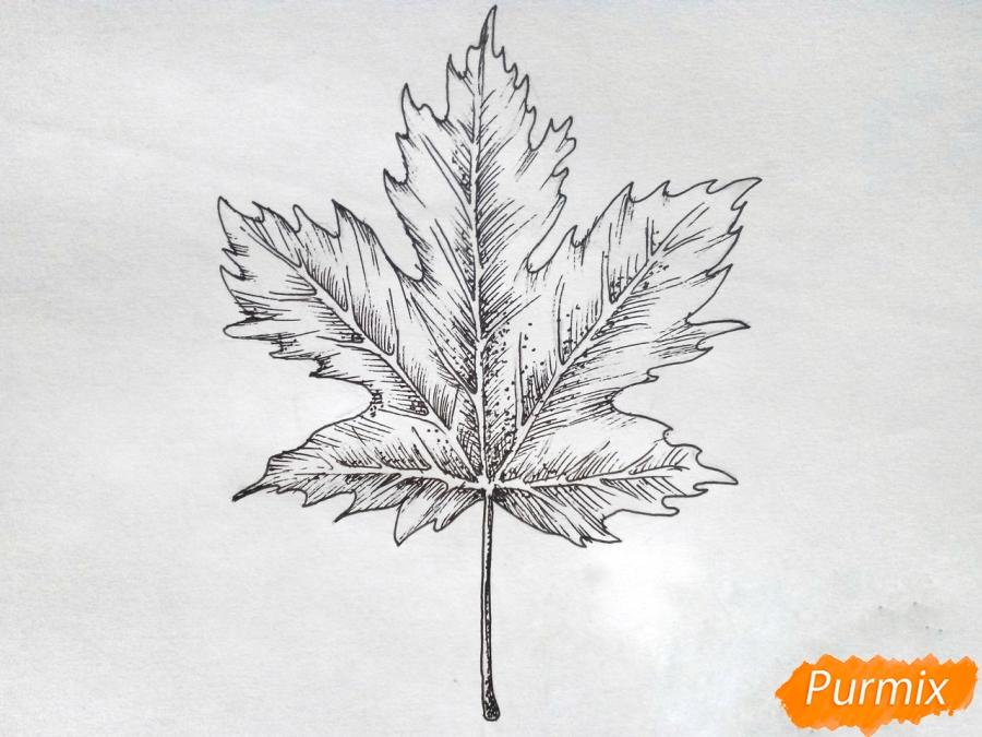 Рисуем кленовый лист черной ручкой - шаг 7