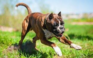 Забава для активных собак на природе