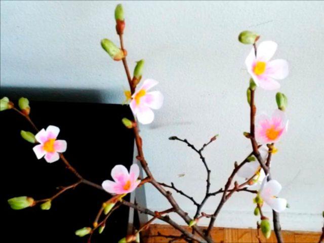 Цветки яблони на ветке