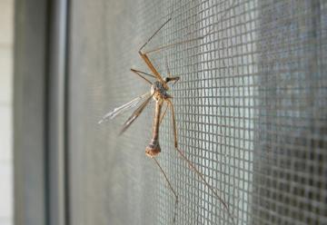 Москитные сетки  надежная защита от насекомых