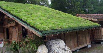Зеленая крыша: технология устройства травяной кровли