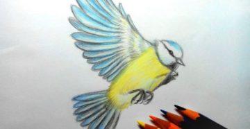 Как нарисовать птицу карандашом: поэтапно для детей