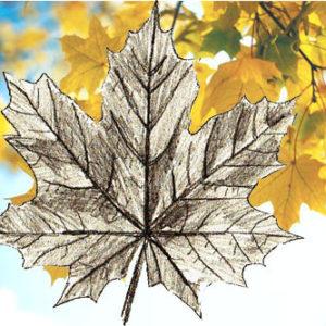 Как нарисовать кленовый лист поэтапно карандашом для начинающих, осенний кленовый лист: рисунок, шаблон