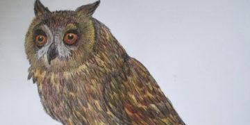 Как рисовать сову карандашом поэтапно для начинающих и детей?